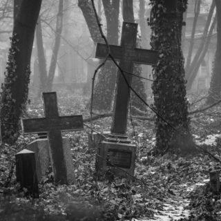tombes dans une forêt - photo flickrcc