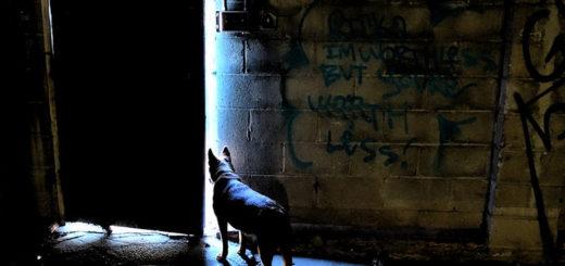 Un chien regarde vers un extérieur illuminé (illustration) - flickrcc