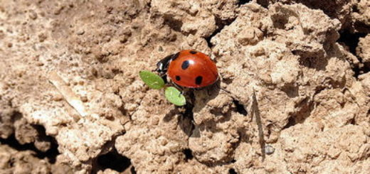 Coccinelle sur une feuille (illustration) - http://www.flickr.com/photos/45409431@N00/14781119444 Found on flickrcc.net