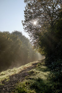 Lumière du matin dans la campagne (illustration) - Image: 'Morning light' http://www.flickr.com/photos/26646199@N05/31371687976 Found on flickrcc.net