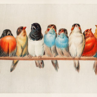Image: 'A Perch of Birds (1880) by Hector Giacomelli (1822-1904). Digitally enhanced from our own original plate.' http://www.flickr.com/photos/153584064@N07/42663976114 Found on flickrcc.net