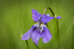 Image: 'Violette #2' http://www.flickr.com/photos/106274573@N04/40843953255 Found on flickrcc.net