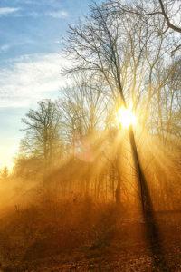 soleil brillant derrière un arbre -  Image: 'Sun shines through'  http://www.flickr.com/photos/45409431@N00/46254141912 Found on flickrcc.net