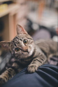 Chaton - Photo by Ramiz Dedaković on Unsplash