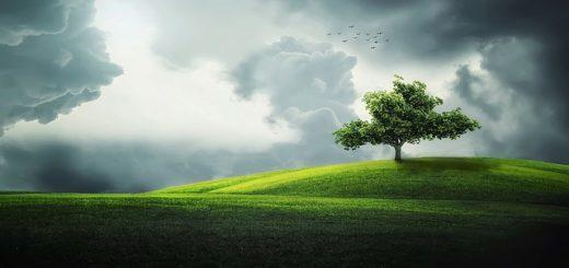 illustration : un arbre dans une prairie sous un ciel d'orage et de lumière, l'été. Image parBessi de Pixabay