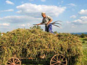 un paysan sur sa charrette de foin - Image parIvaylo Ivanov de Pixabay