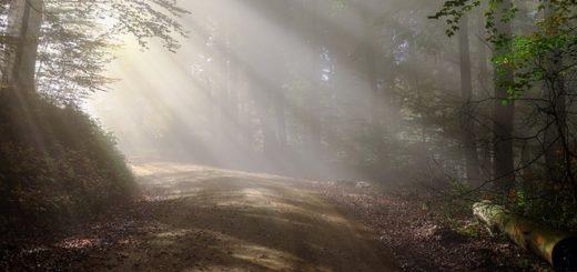 Lumière du matin dans un sous-bois - Image par1195798 de Pixabay