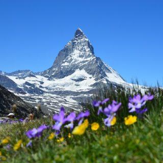 Le Cervin avec au premier plan des felurs de montagne - Image par Claudia Beyli de Pixabay