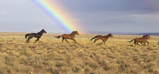 Un arc en ciel, la nature, le vent, la pluie, le soleil, et des chevaux - Image par skeeze de Pixabay