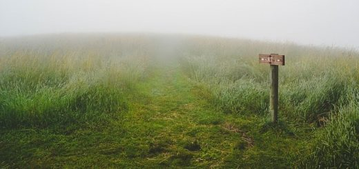 Un panneau indicateur peu clair, dans le brouillard, avec des chemins presque invisibles dans l'herbe - Image par Free-Photos de Pixabay