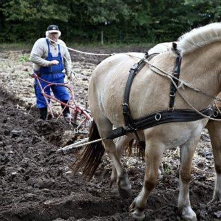 un agriculteur laboure un champ avec l'aide de chavaux - Image par David Mark de Pixabay