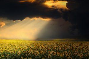 champ de tournesols avec un rayon de soleil dans un ciel d'orage - Image parenriquelopezgarre de Pixabay
