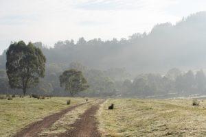 chemin dans une campagne, au petit matin - Image par pen_ash de Pixabay