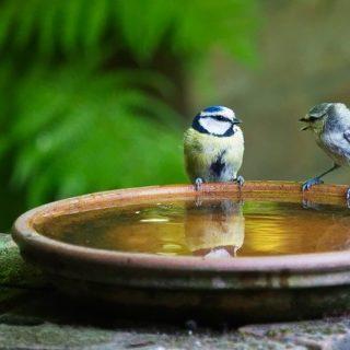 Deux oiseaux sur le bord d'une coupe remplie d'eau semblent converser - Image par Andrew Martin de Pixabay