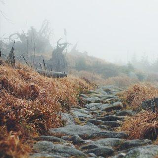chemin caillouteux - Image parFree-Photos de Pixabay