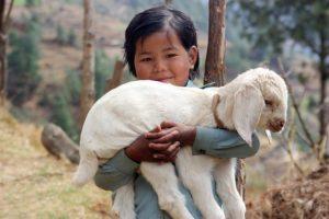 petite fille népalaise tenant dans ses bras un agneau - Image par Peter Colgan de Pixabay